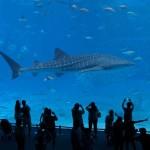 子どもも大人も楽しめる「美ら海水族館」へ!沖縄旅行で定番の観光スポットです。