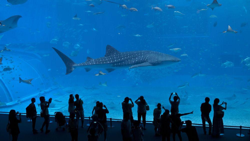 ジンベイザメが人気