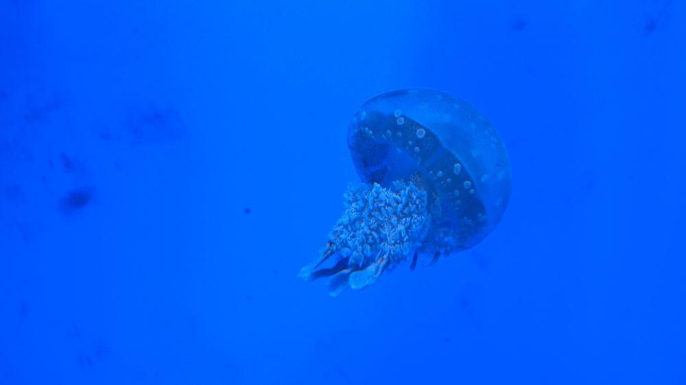 クラゲも水族館にはいる