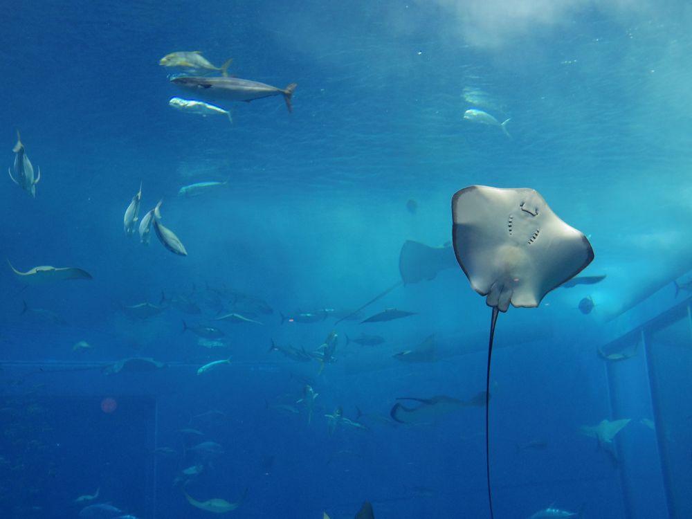 美ら海水族館の観光スポット