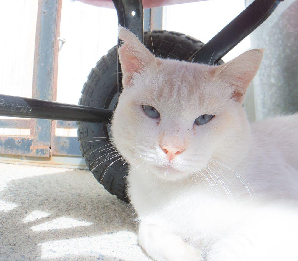 食堂の前で迎えてくださった猫さん