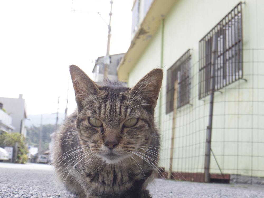 きしもと食堂の猫