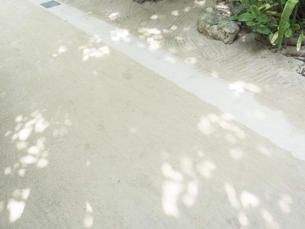 掃除されたフクギ並木の道