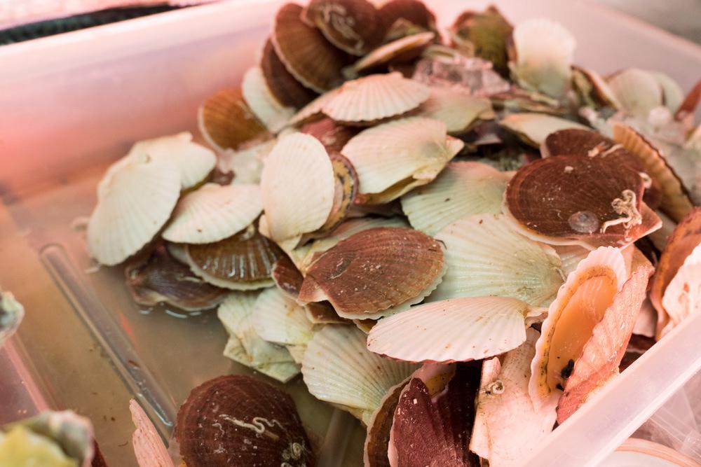 ミニホタテ、貝も安い