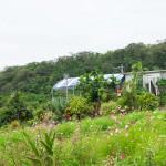 南城市の「Garden Kuu Cafe」は、目の前がお店の畑!採れたての沖縄有機野菜を堪能