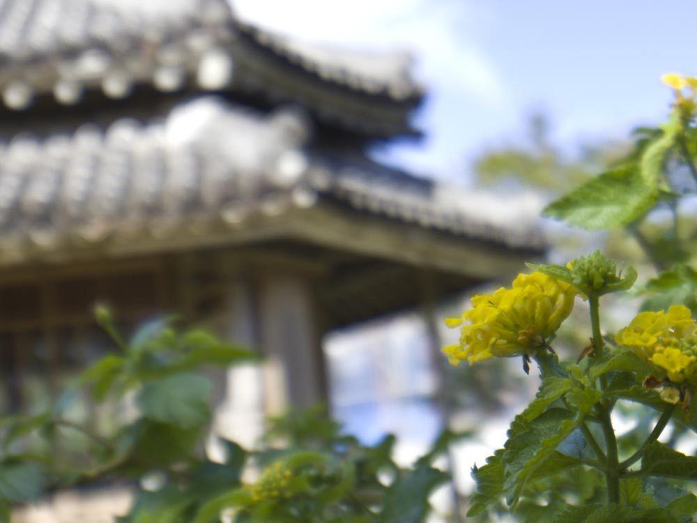 六角堂とお花