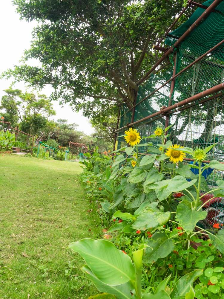 お花がたくさん