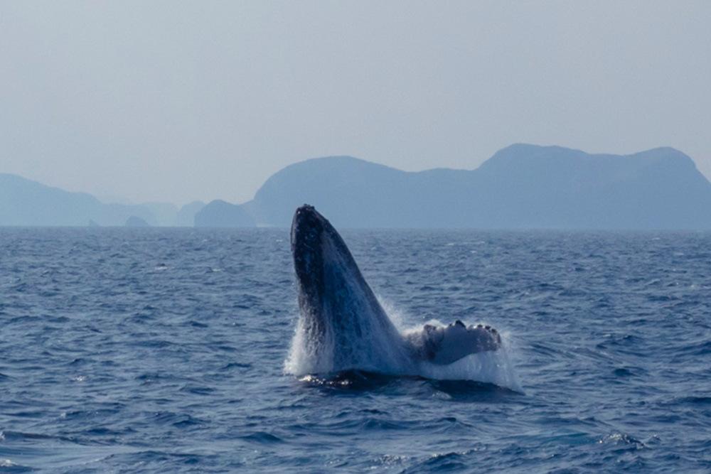 クジラが跳ねる