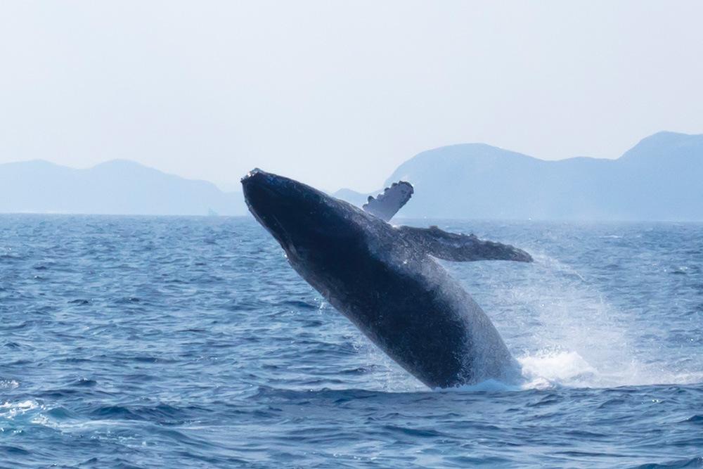 クジラのブリーチング