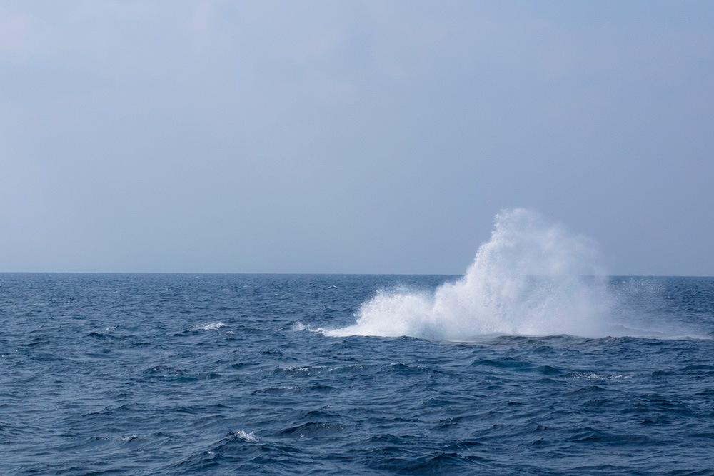 クジラのブロウ