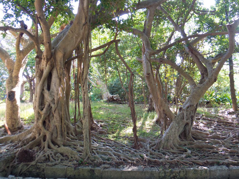 木の枝と根っこがすごい