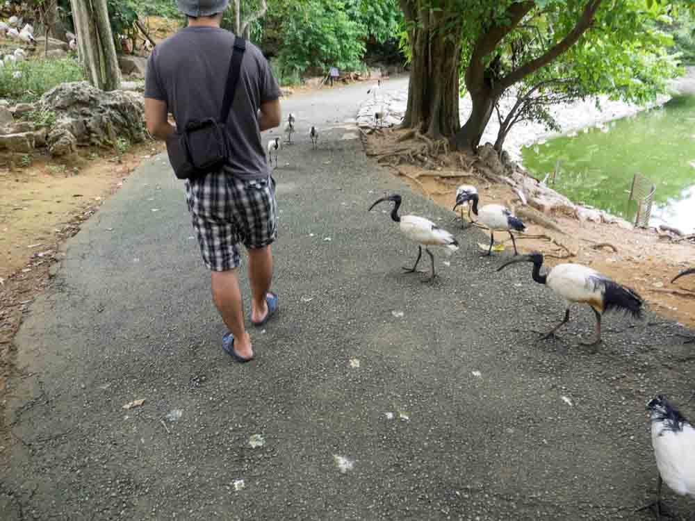 餌くれよーと鳥が近づいてくる