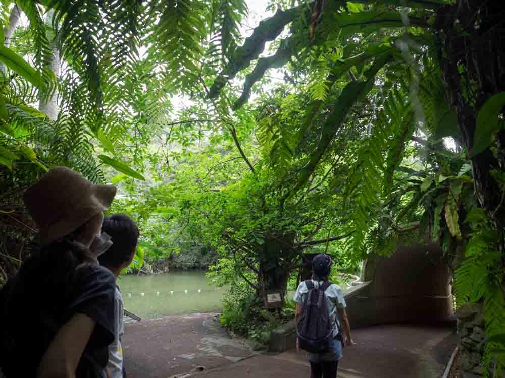 アマゾンぽい池