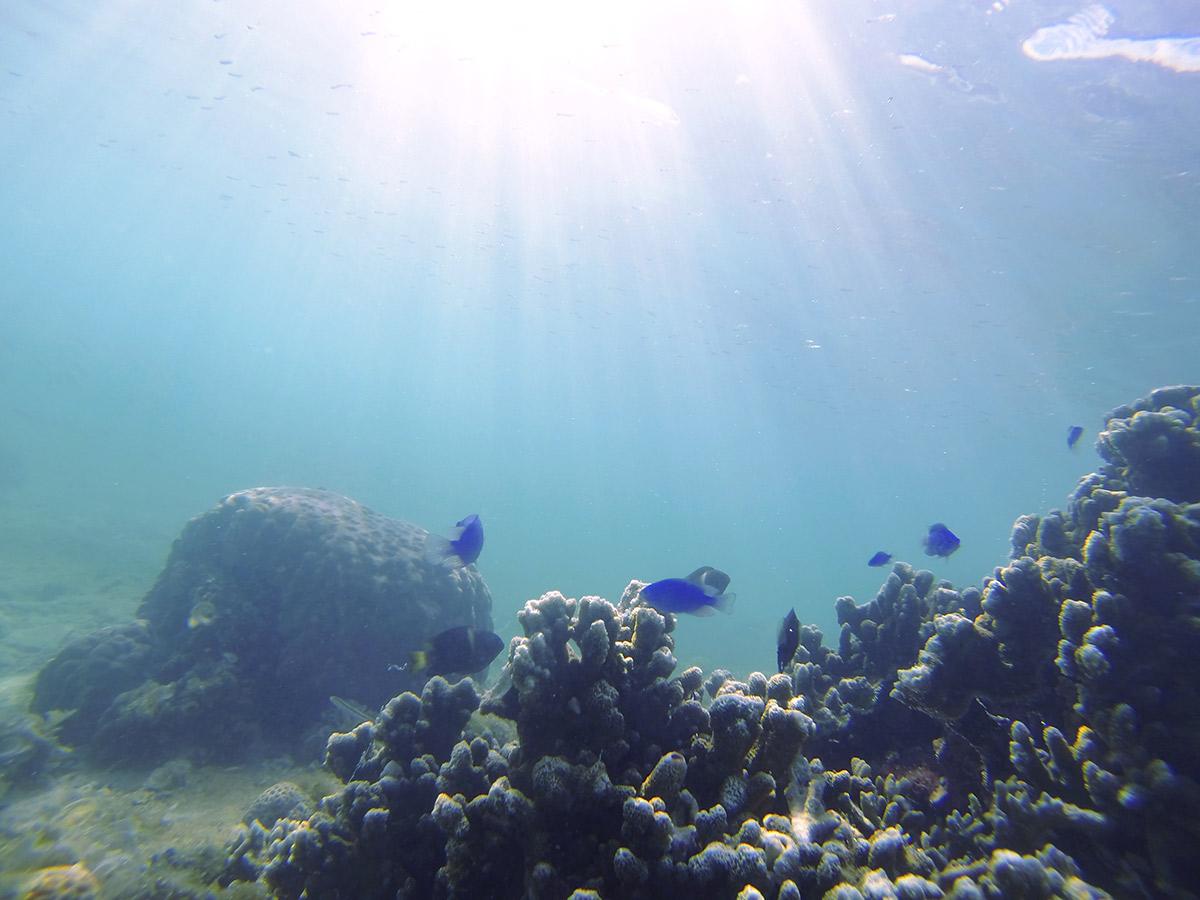 魚も自由に泳ぐ