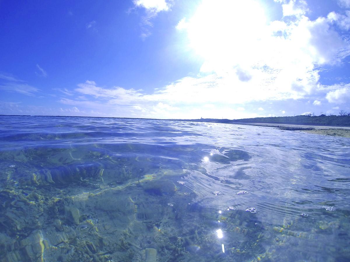 たまに海から顔を出す