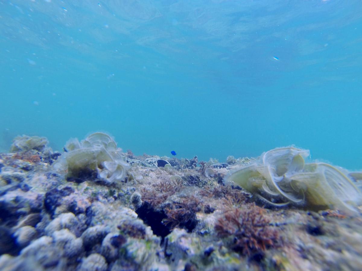 青い魚もサンゴ付近に多い