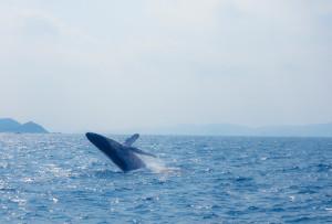 冬の沖縄の楽しみ方
