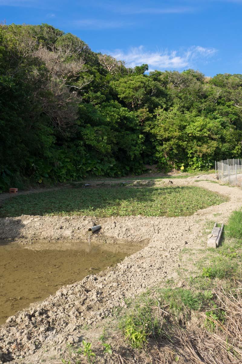 自然豊かな垣花樋川