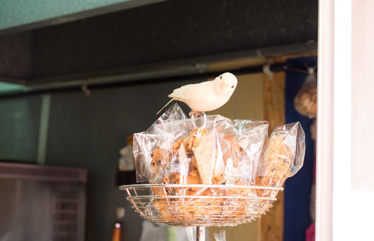 小鳥のパン