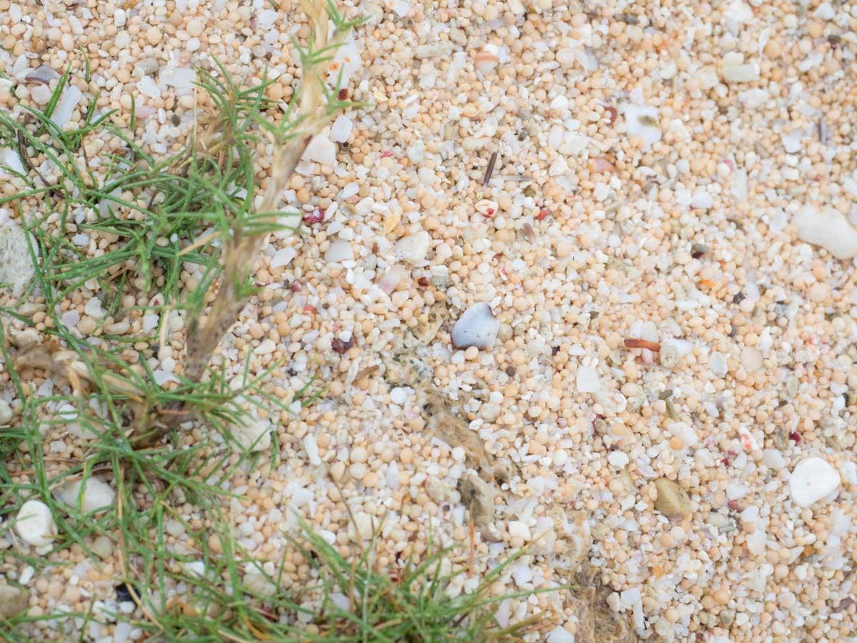 サンゴがベースの白い砂