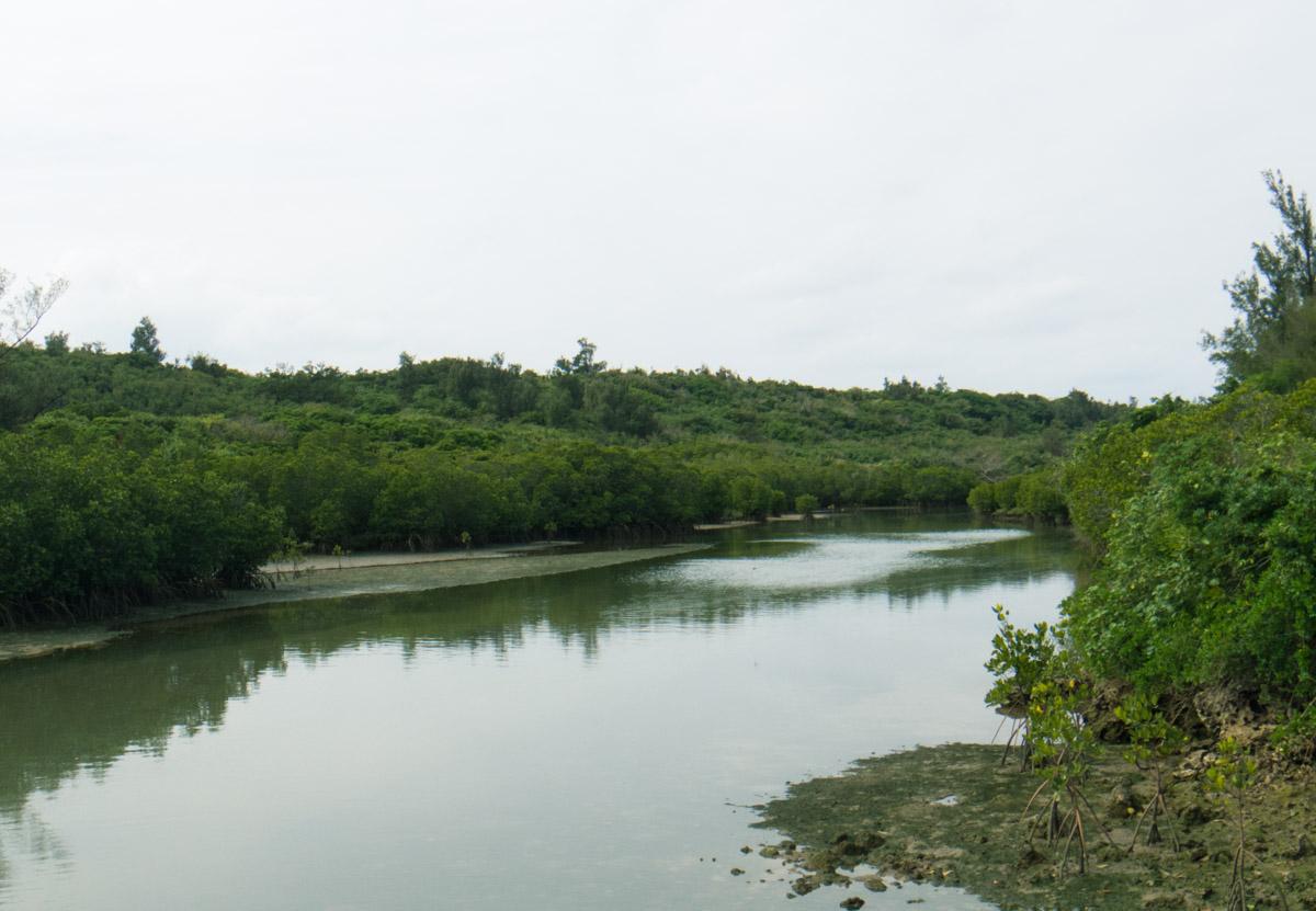 川には豊かな泥が