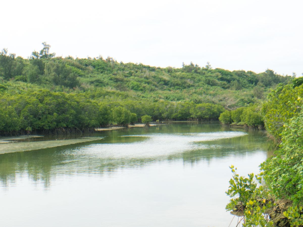 河口付近にマングローブ群落が広がる