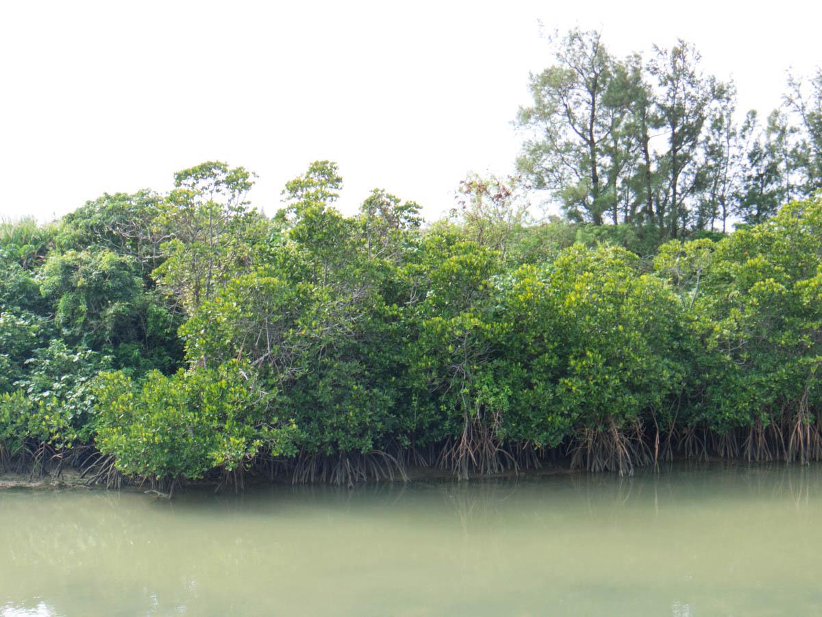 根が川に浸っている