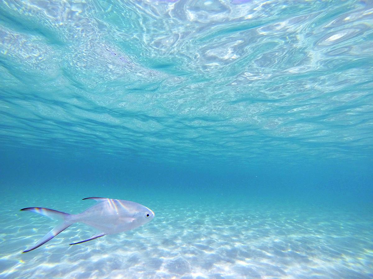 白い魚がいた