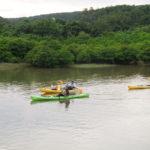 東村ふれあいヒルギ公園。マングローブが群生する貴重な川でのカヤック体験が人気!