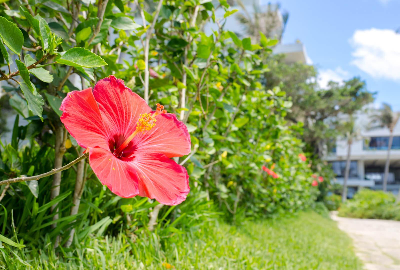 沖縄の定番観光スポット