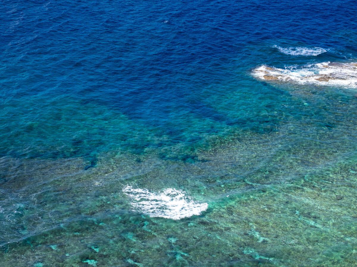 与那国島のサンゴ