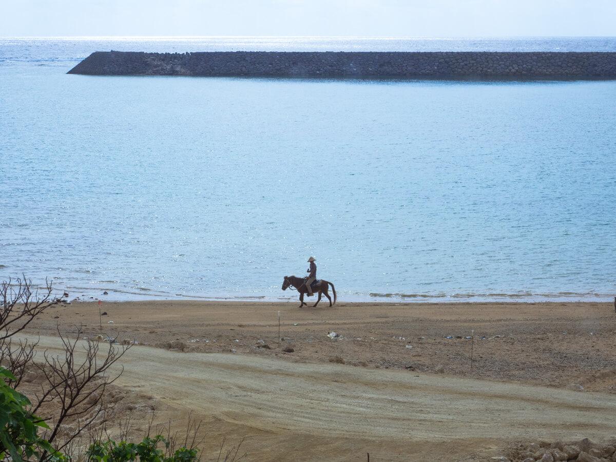 与那国馬の散歩