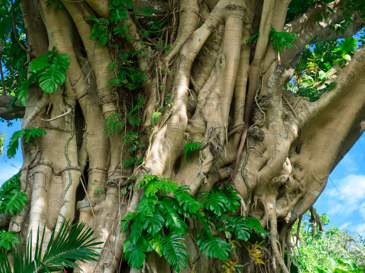 様々な植物が共生している