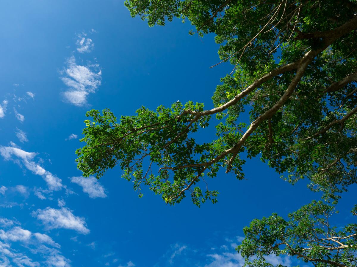 青空に映える枝