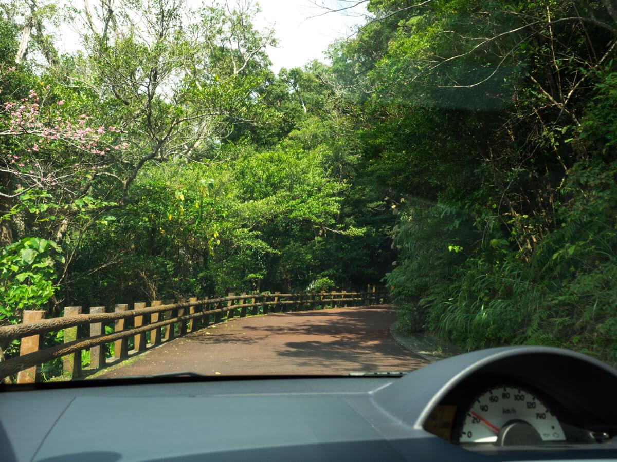 名護城公園を車で進む
