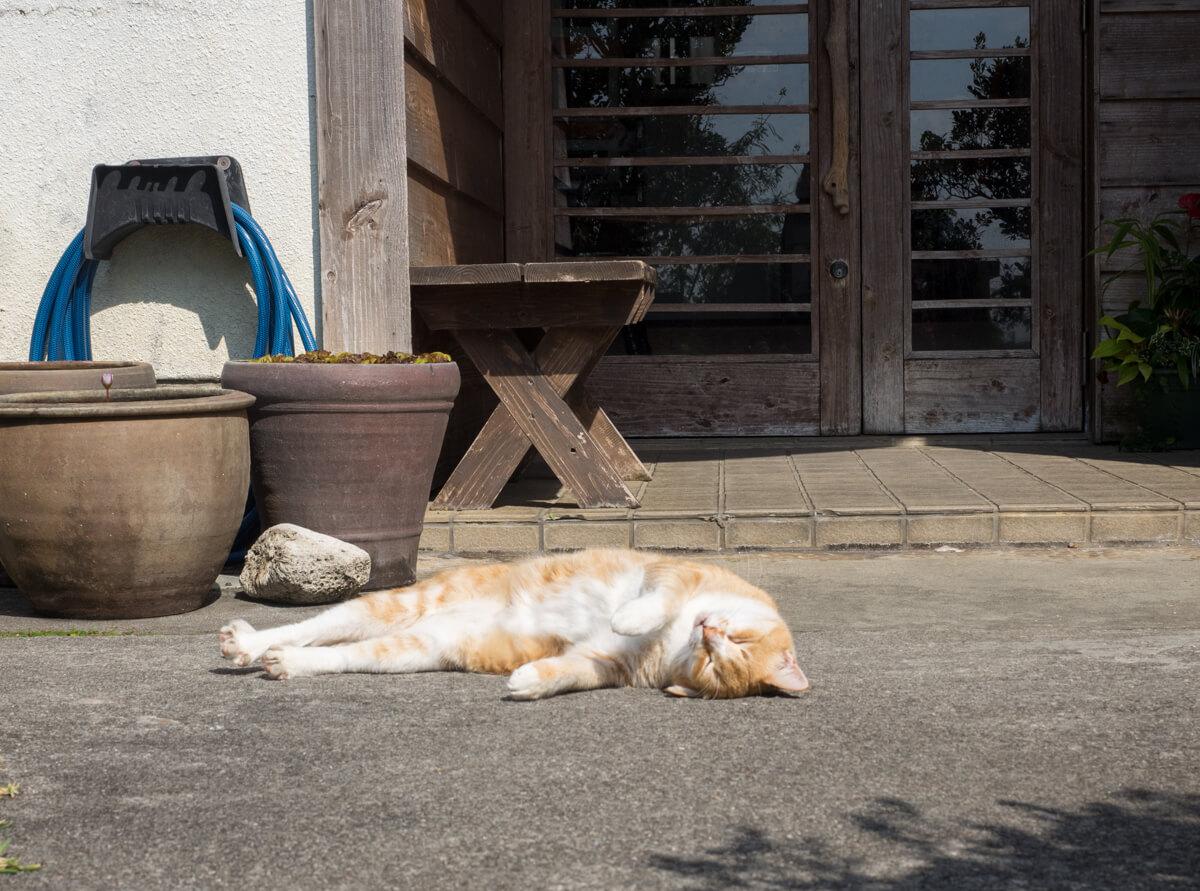 猫がお昼寝でお出迎え